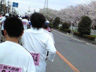 吉川市なまずの里マラソンと桜