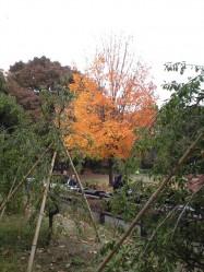 世田谷公園 紅葉