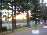 世田谷公園夕日