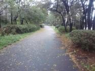 目黒川 ジョギングコース